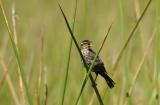 x9195_Bird n d Reeds 2.jpg