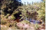 Soldiers Pond, Near Blockhouse Church (Fort Clark), Near Jacksonville, Ga.