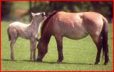 Wild horses.