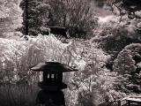 Tea Garden plants