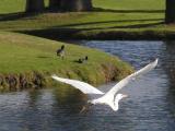 Duck airshow