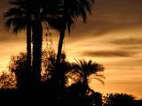 Warm desert sunrise