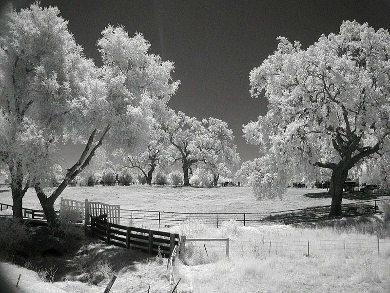 Fenced field