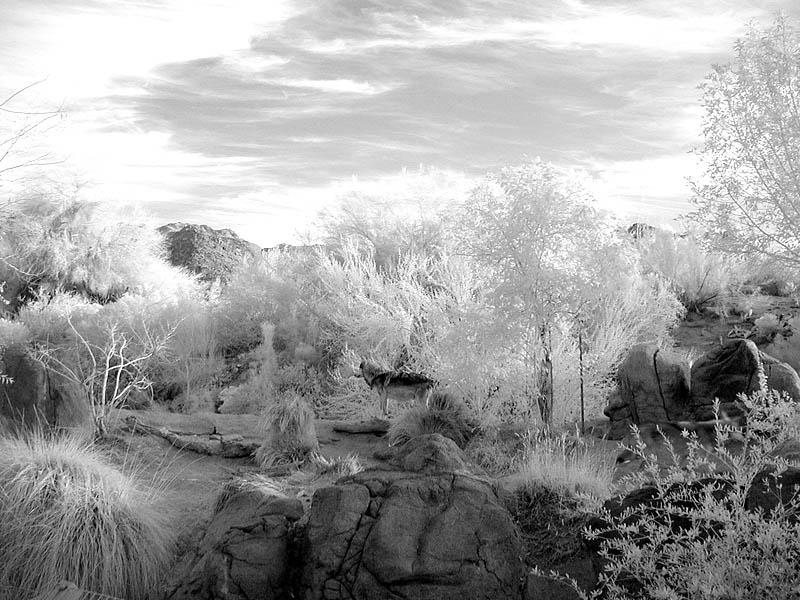 A Lobo (infrared)