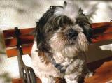 Pets- ChinChin on Bench