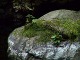 Hardy plants.jpg