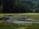 Goldstream estuary.jpg