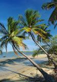 Viçoso coqueiral da praia fluvial do Fortim3