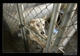 »O¤¤¿¤(¦Z¨½)°Êª«¤§®a / Houli Animal Shelter
