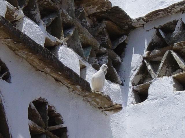 Safe in nest