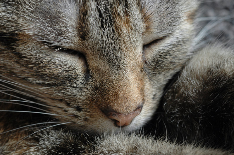 Just snoozing