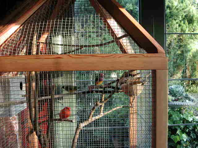 Living Room Aviary