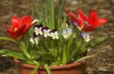 Potted flowers - shot with 80-400 and 1.5 teleconverter