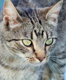 Mike's Cat.jpg