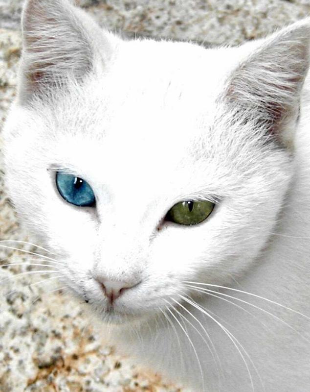 BlueGreen=  Eyes -2002