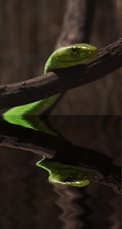 : snake reflected :