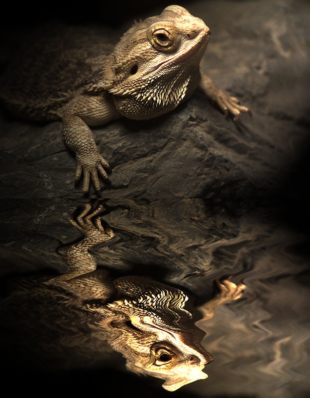 : reflected toad :