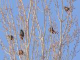 Birds in tree.jpg