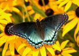 Insects & Butterflies