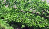 Turnhout / Kempen (Belgium) - (28.5.2002) - Omgeving Hoge Heide