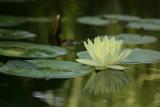 450 Monet waterlily.jpg