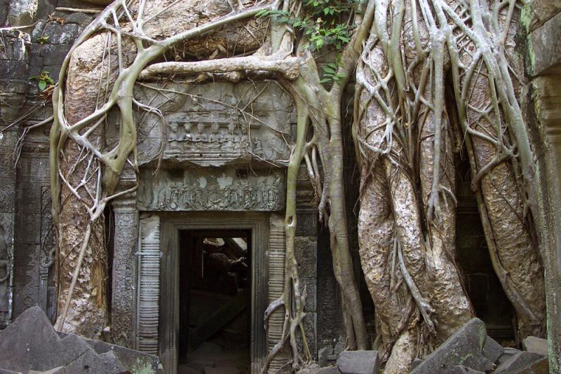 Roots at the door, Angkor, Cambodia, 2000