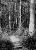 Mystery Forest B/W