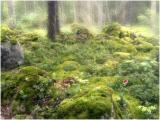 Tanglewoods