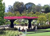 We toured the gardens at the Getty ....