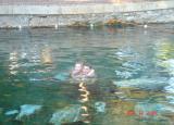 natural hot spring of hierapolis.JPG