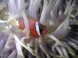 hong_kong_diving