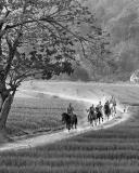 horse monk1200 BW.jpg