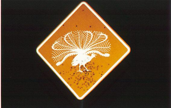 Warning Bird Crossing--complete with shotgun blast holes