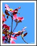 ds20050501_0027a5wF Blossoms.jpg