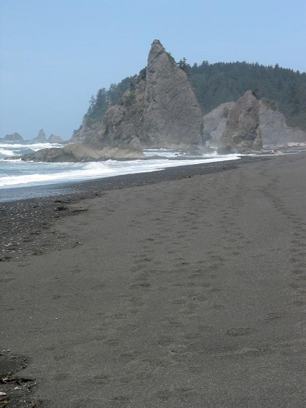 Footprints and Misty Seastacks