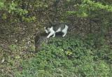 the kitten 050430
