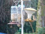 Roger's Hi Tech Bird Table