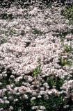 White Floral Blanket