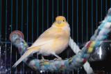Captured Bird