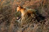 African Safari -- Londolozi