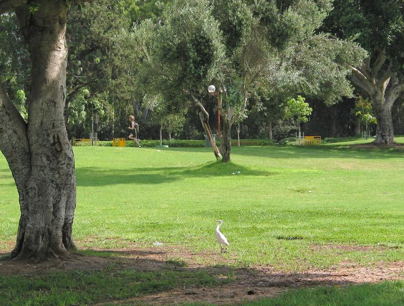 egret&runner.jpg