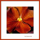 Dark orange flower, Bry/Marne