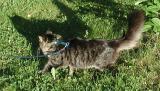 Need to catch that shadow! --- Saisko tuon varjon kiinni?