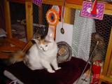 BIS in kitten class 3-6 months