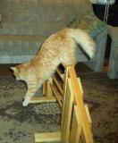 Linda training agility  - Linda treenaa agilitya