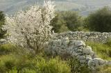 Landscape near  Licodia Eubea