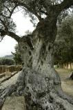 Garden of Kelymbetra at Agrigent