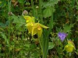 Wildflowers on Mt, Diablo