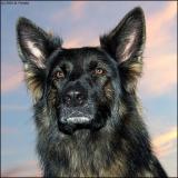 dog9527.jpg
