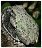 toad4562.jpg